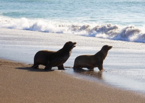 Marine Mammal Center Fauna Marin California