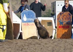 Marine Mammal Center Fauna Marin California Seasons Greetings